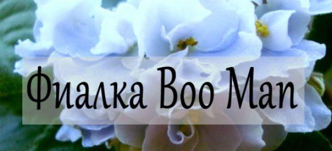 Фиалка Boo Man — описание сорта
