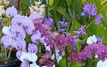 Что вы знаете об Орхидеях?