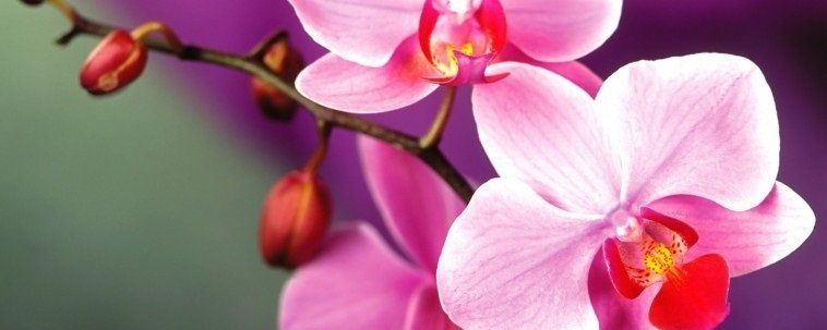 Orhid 2