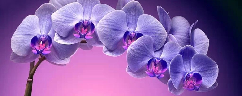 Orhid 4