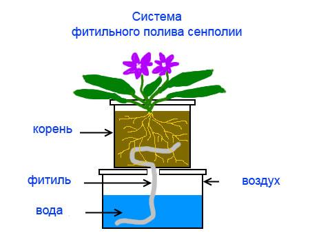 Система фитильного полива Фиалки (Сенполии)