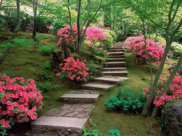 Азалия лайтс в парке Японии